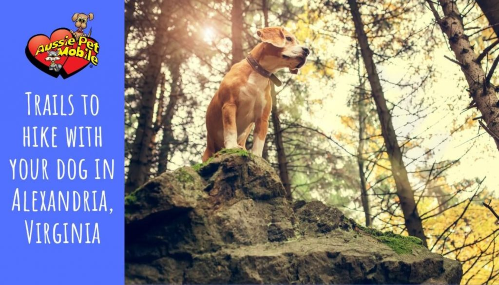 Trails to hike with your dog in Alexandria, Virginia