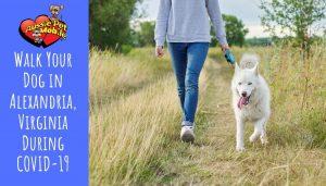 Walk Your Dog in Alexandria, Virginia During COVID-19